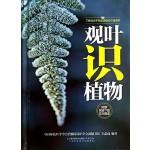 观叶识植物(汉竹)